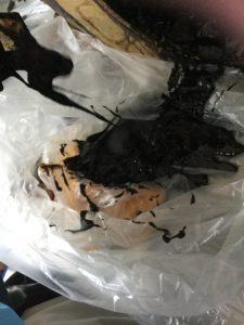 すくい出した真っ黒い油の塊