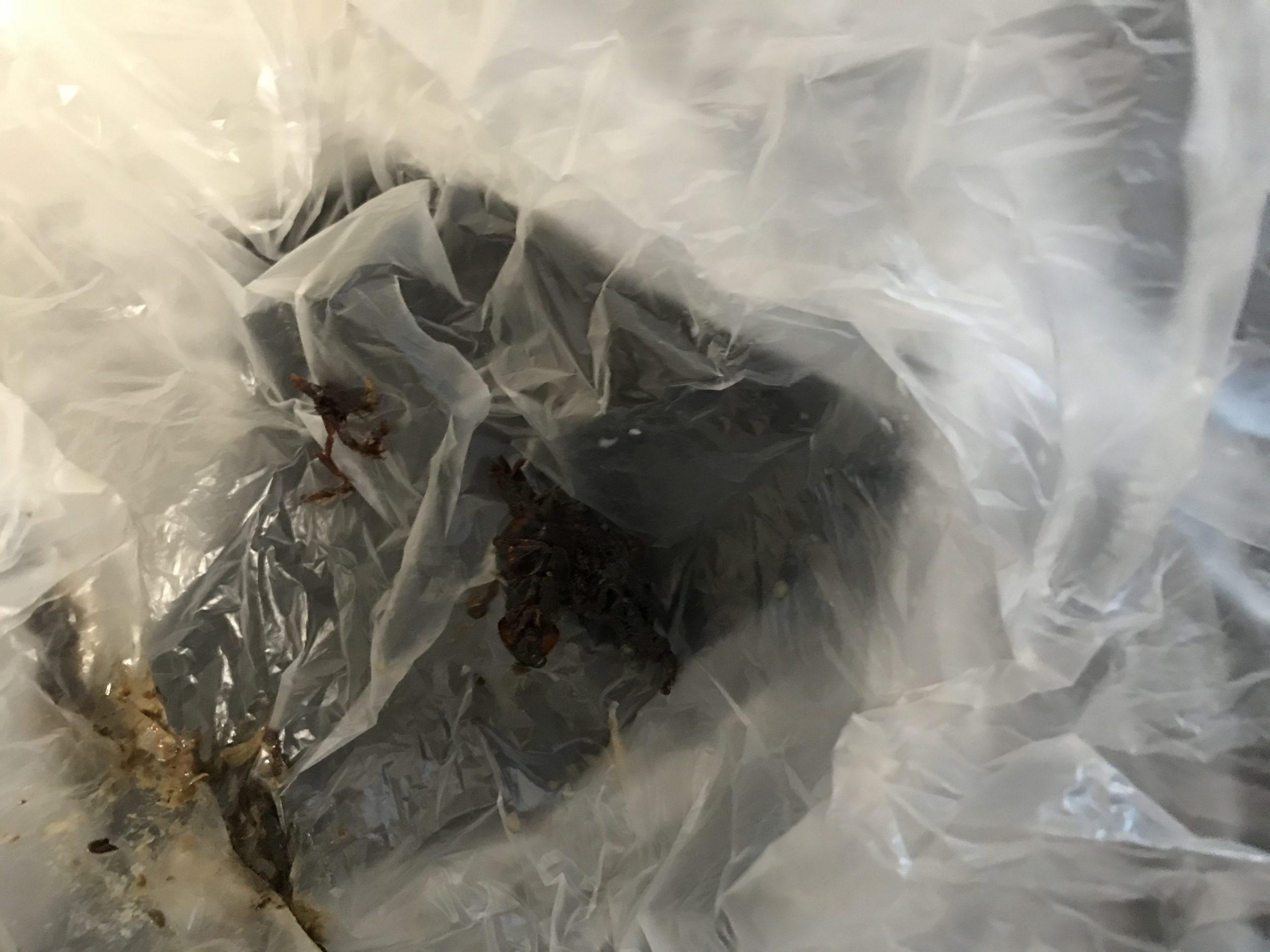 ヤマハトクラスレンジフードのクリーニング 油除去